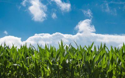 Calculează dimensiunea exploatației agricole și află ce fonduri poți accesa pentru ferma ta